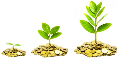 Grünes sich entwickelndes Pflänzchen aus Geld wachsend